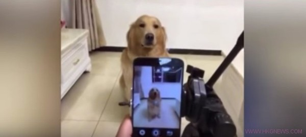 fun-smdog