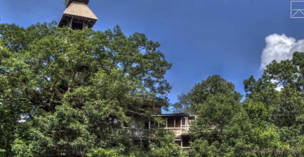 fun-treehouse
