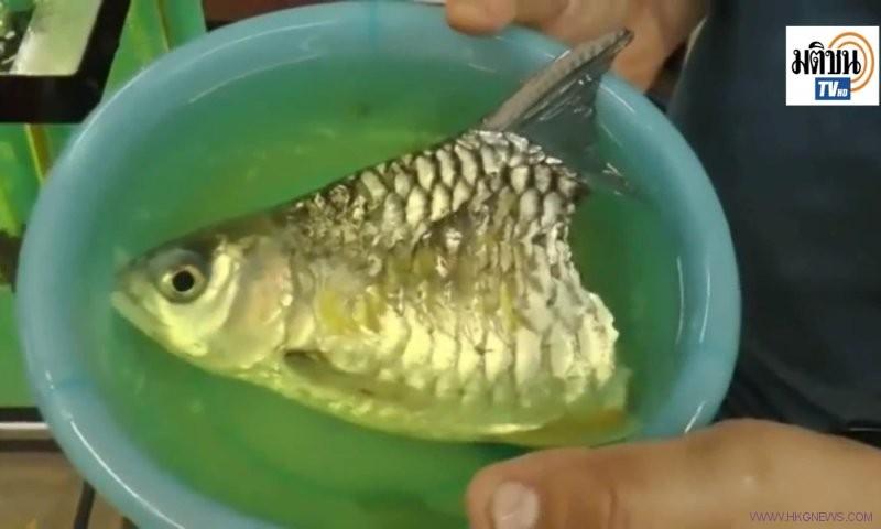 fun-fish