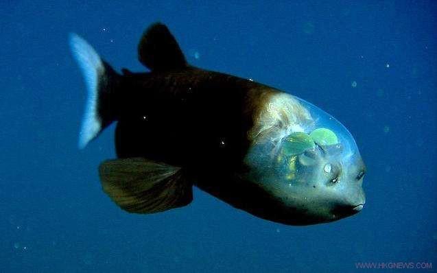 fun-special fish